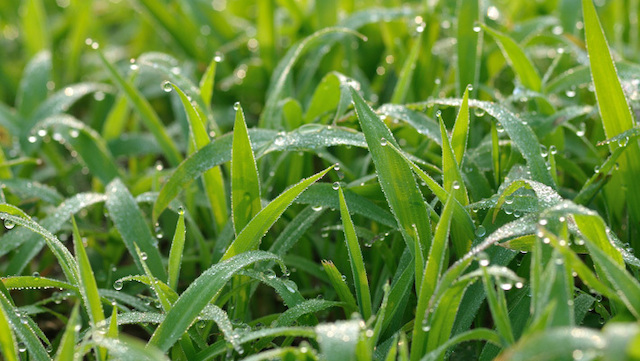 Water-on-Grass-710x400
