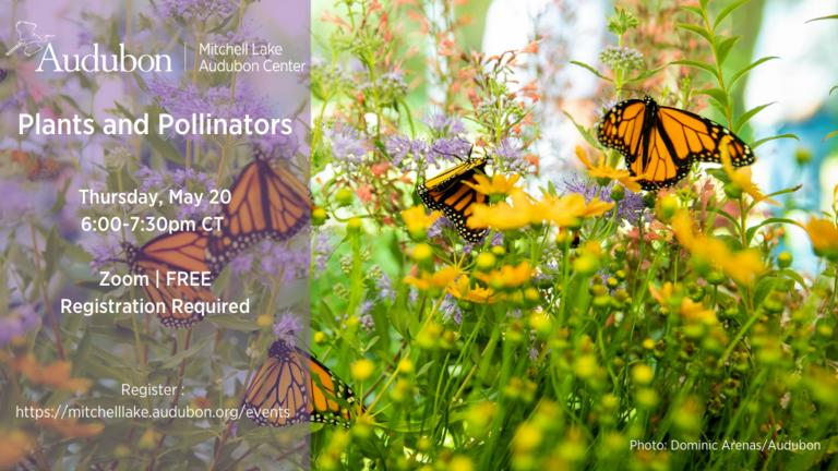 MLAC_Plants%20and%20Pollinators