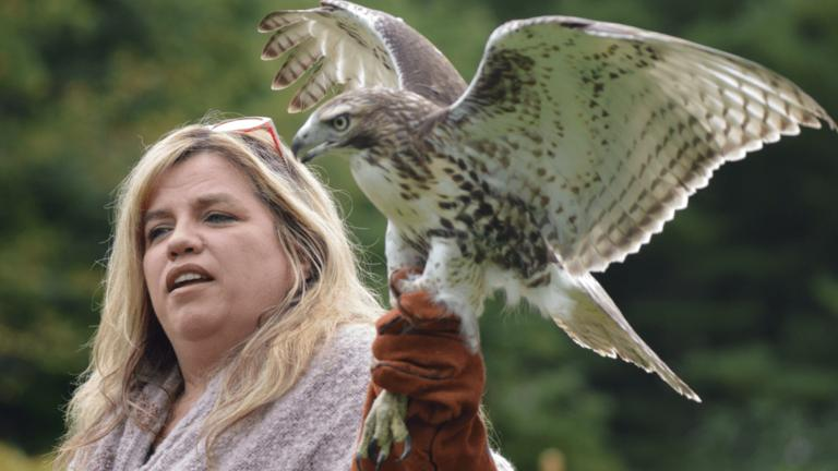 Missy Runyan with a rehabilitated Red-tailed Hawk just prior to release back into the wild at DOAS 2016 Open House. Photo by Tina Niesluchowski.